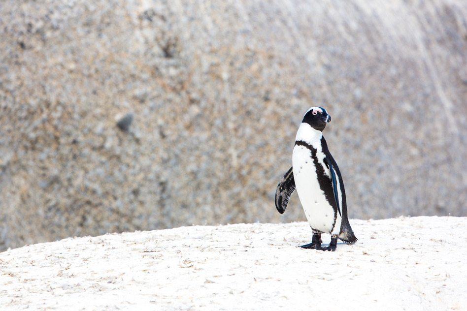 Understanding the New Penguin 4.0 Update from Google